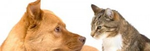 🐈Загадки про домашних животных