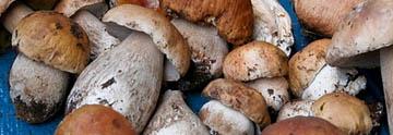 Загадки о грибах