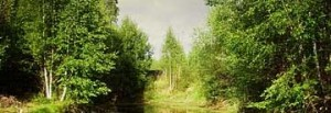 Загадки о лесе