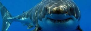 Загадки про морских животных
