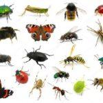 Загадки про насекомых