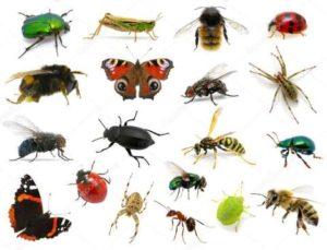 🐛Загадки про насекомых