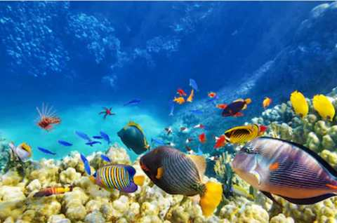Загадки про рыб
