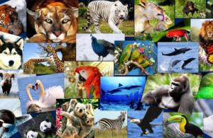 🦔 Загадки про животных